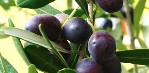 olivenoel-livinghomelifestyle-000