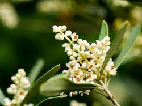 olivenoel-livinghomelifestyle-001
