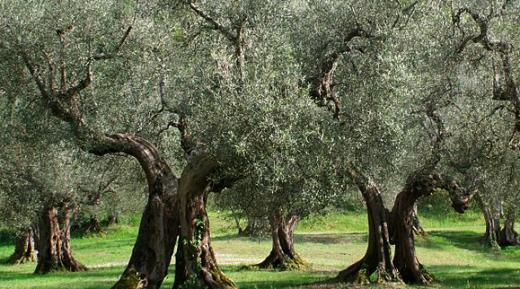 olivenoel-livinghomelifestyle